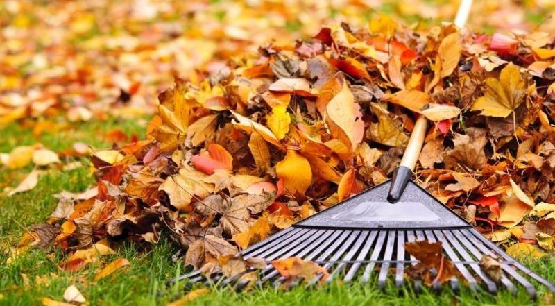 Почему в марте я пожалела о том, что не собрала опавшую листву осенью