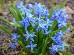 10 растений, которыми можно отравиться на даче