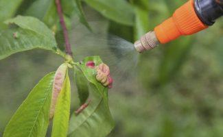 12 растений, которые обрабатывают от вредителей в начале апреля