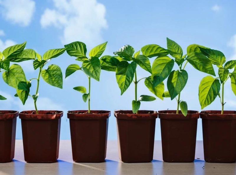 5 ошибок начинающих садоводов, из-за которых семена могут не взойти