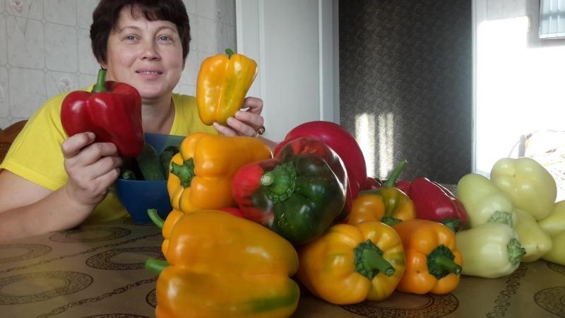 В старом журнале прочитала, как подкармливать перцы, в итоге урожай превзошел мои ожидания