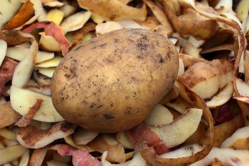 4 подкормки из картофельных очисток, которые не уступают минеральным удобрениям