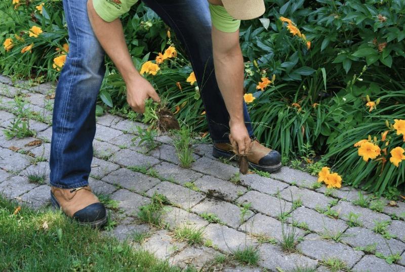 10 способов уничтожить траву на дорожке между плитками