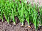 Что нужно сажать в апреле на растущую луну, чтобы получить богатый урожай