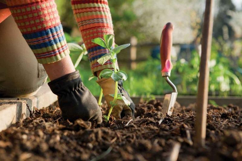 4 удачных сочетания посадки овощей, которые избавят от вредителей и увеличат урожай