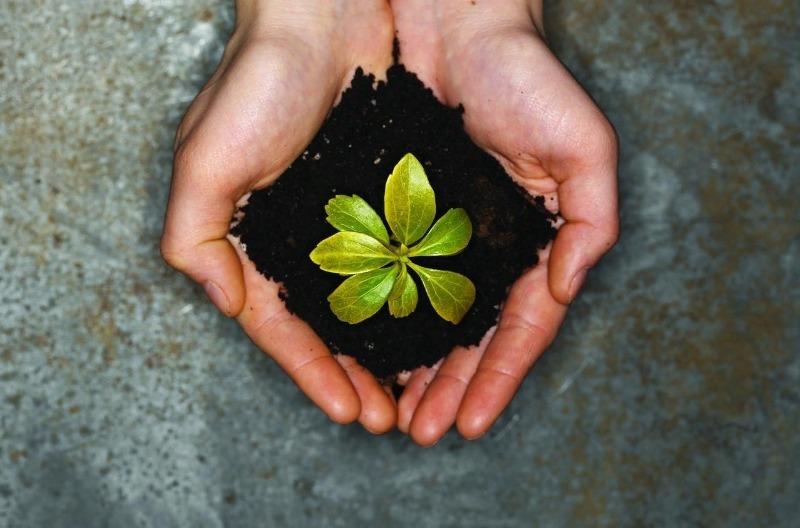 Подкормка растений, уничтожение муравьев и еще 9 способов применения кофейной гущи