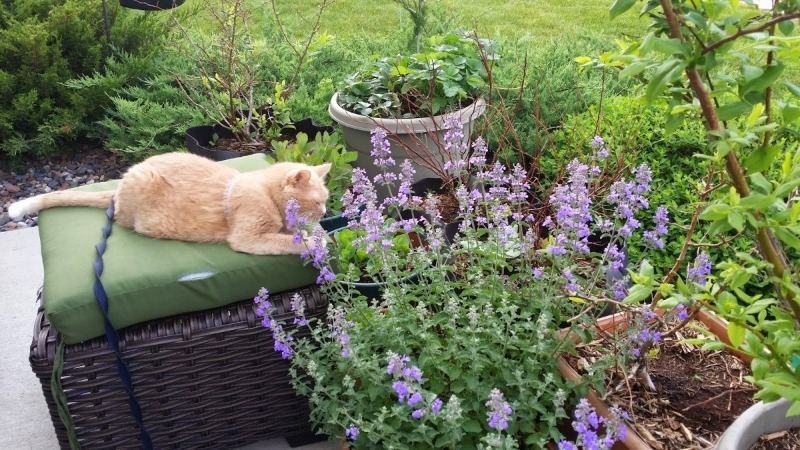 5 цветов, которые отпугивают вредителей с огорода