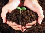 6 эффективных удобрений, которые найдутся на кухне