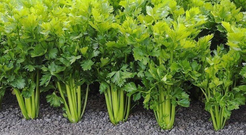 9 холодостойких огородных растений, которые можно смело сажать раньше остальных