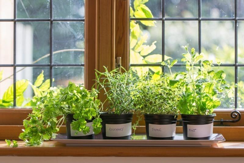 Экономный огород: купила и посадила одно растение пряных трав, а вырастила десять