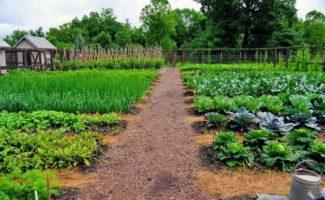 7 главных ошибок, которые могут допустить даже опытные огородники