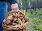 5 заблуждений неопытного грибника, которые опасны для жизни