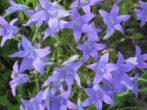 5 способов применения сосновых иголок для защиты растений от вредителей и болезней