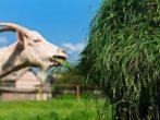 6 полезных применений травы, скошенной на газоне