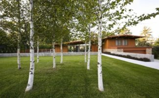 8 деревьев возле дома, которых приметы советуют остерегаться