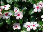 Отличное решение: 7 цветов в саду, которые не нужно поливать