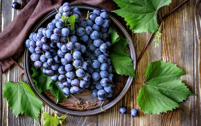 Внимание на листья: 6 болезней винограда, которые могут лишить вас урожая