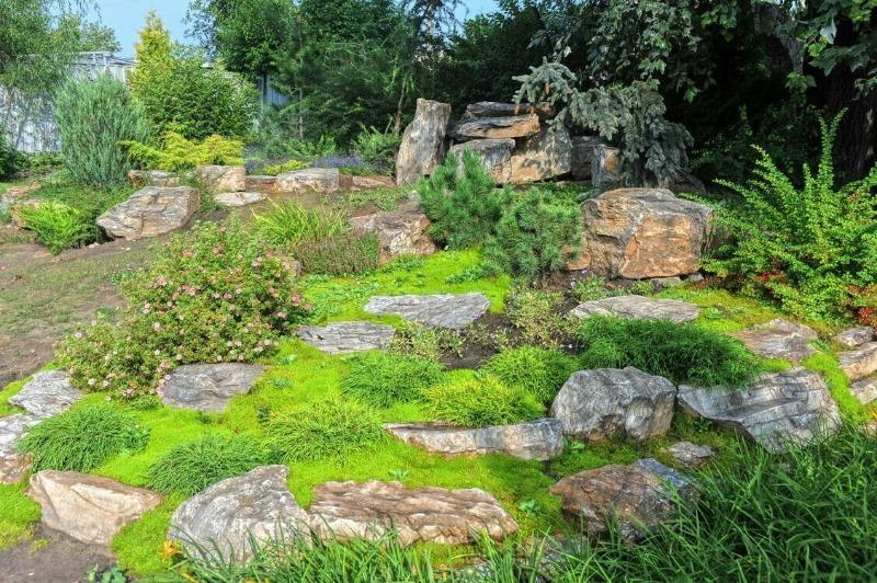 6 полезных способов применения мха в огороде