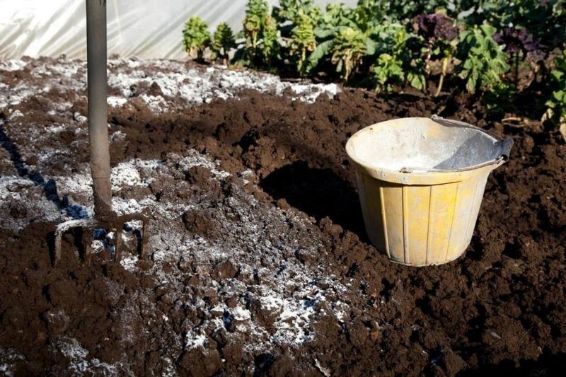 Не только раскисление почвы: 6 способов применения доломитовой муки на даче