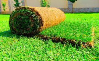 5 преимуществ и 4 недостатка рулонного газона