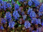 11 почвопокровных растений, которые цветут все лето