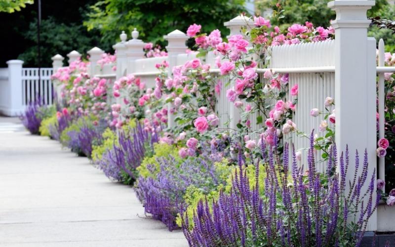 8 цветов, которые можно посадить рядом с розами