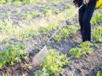 5 народных средств, которые спасут растения от паутинного клеща