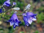 7 почвопокровников для альпинария, которые быстро заполнят пустоты на клумбе
