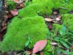 6 основных сорняков на газоне и простые методы борьбы с ними
