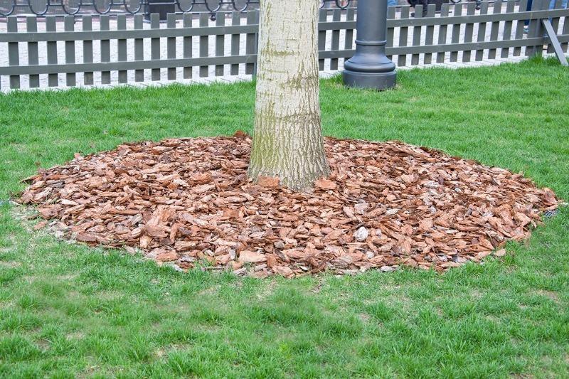 7 органических видов мульчи для укрытия приствольного круга дерева