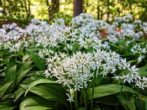 9 пряных трав, которые будут расти даже в тени