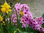 9 растений для посадки вдоль дорожек, которые создадут непрерывное цветение