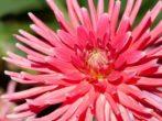 9 красивых однолетних цветов для бордюров
