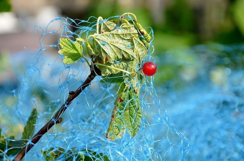 Как защитить свой урожай от птиц