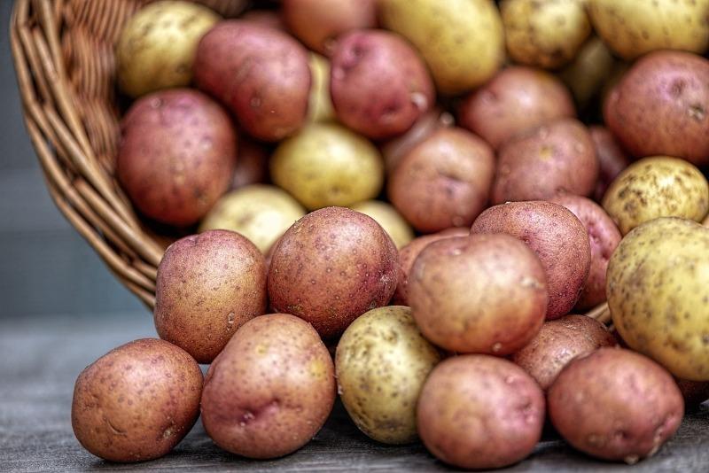 7 ошибок дачника, из-за которых картофель поражает черная ножка