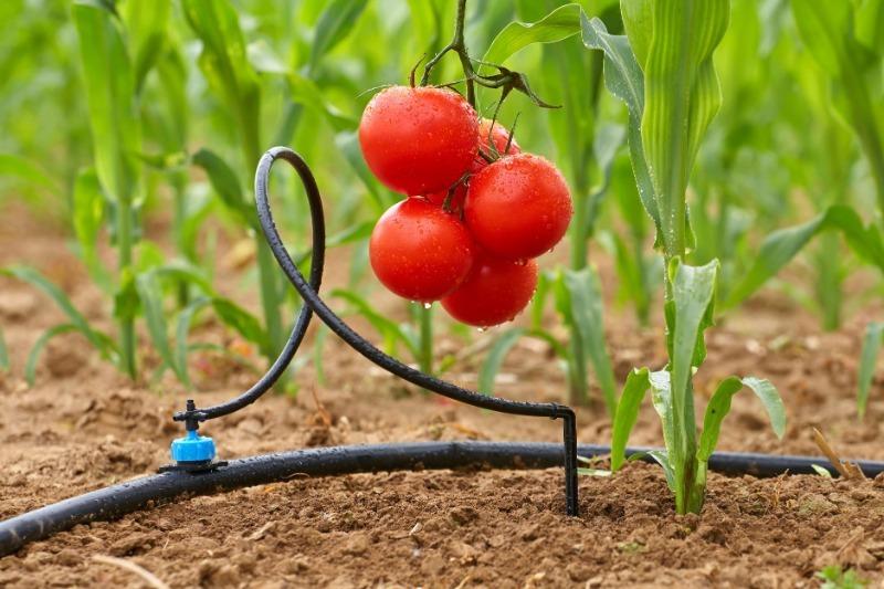 Какие плюсы и минусы разных способов полива растений