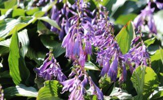 5 красивых растений, которые победят сорняки на участке