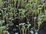 Еще успеем собрать урожай: какие растения не поздно посадить в июле