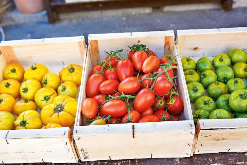 Как сохранить собранные помидоры свежими и крепкими надолго