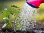 Полить или забыть: 7 ошибок дачников, которые губят урожай