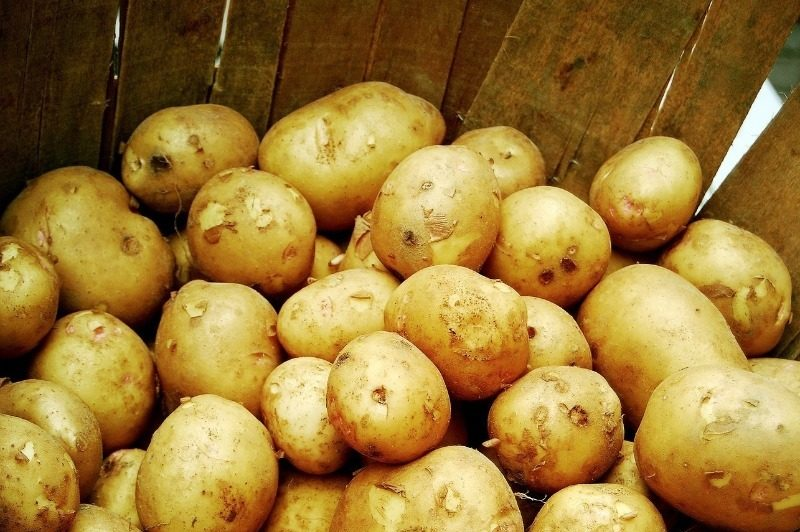 Как правильно заложить картофель на хранение: подготовка, условия и температура