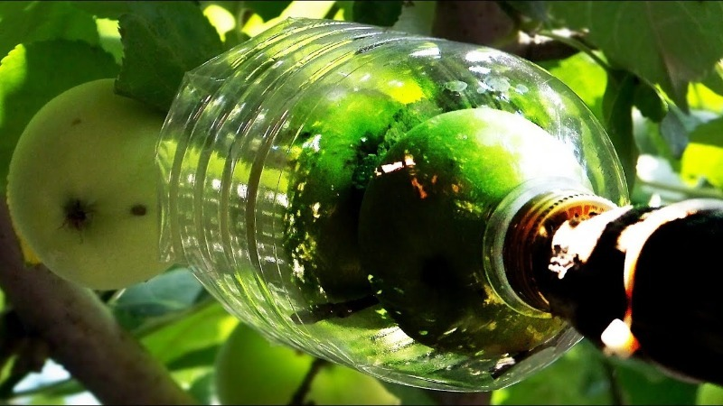 3 способа сделать плодосъемник из швабры и пластиковой бутылки