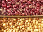Простые советы по уборке лука, благодаря которым урожай сохранится дольше