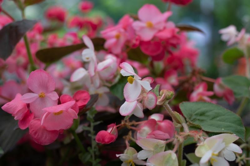 9 комнатных цветов, которые лучше не поливать, чем залить