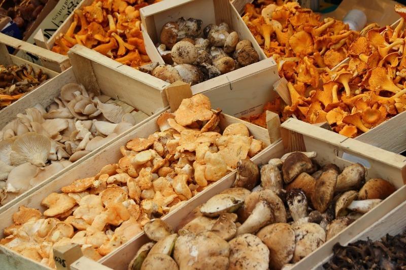 Почему только русские едят грибы из леса, а за границей с этим сложно