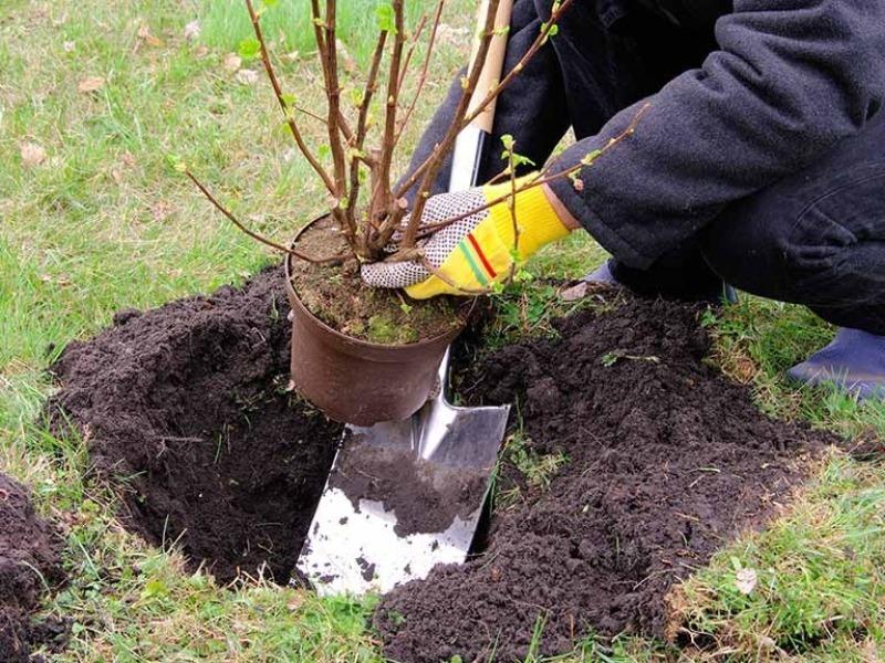 В саду и огороде: 9 важных дел, о которых нельзя забывать в августе