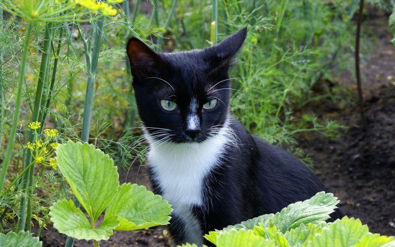 Пушистые вредители: 7 гуманных способов отвадить чужих кошек с вашего участка
