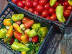 Салат «Остатки сладки»: перерабатываем последние овощи с огорода