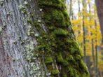 Как по деревьям узнать, что зима будет малоснежной