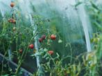 Применение уксуса в теплице — принципы обработки и результаты